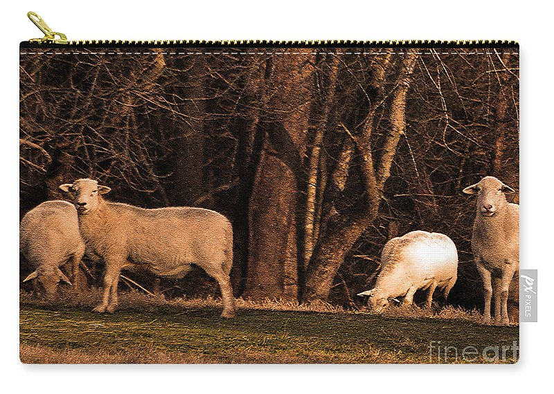 Sheep Carry-all Pouch featuring the photograph The Gazing And Grazing Sheep by Lydia Holly