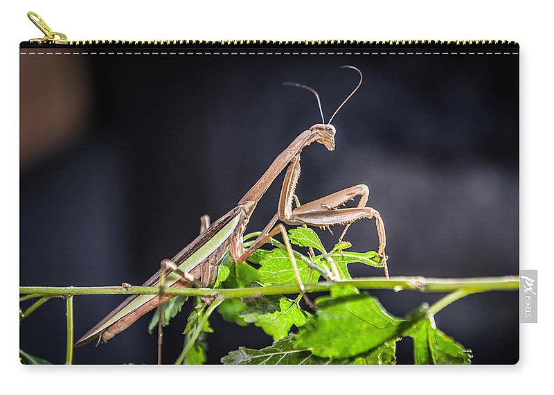 Praying Mantis Carry-all Pouch featuring the photograph The General by Sennie Pierson