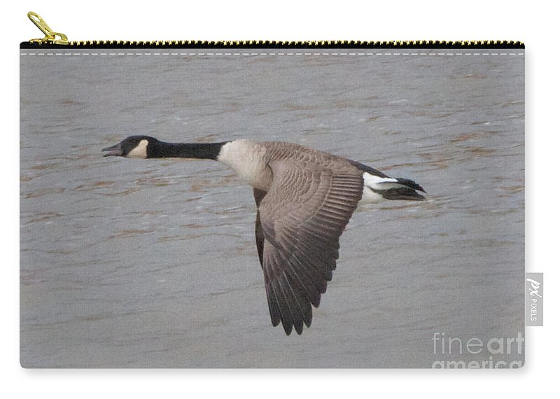 Canadian Geese Carry-all Pouch featuring the photograph The Glide by William Norton