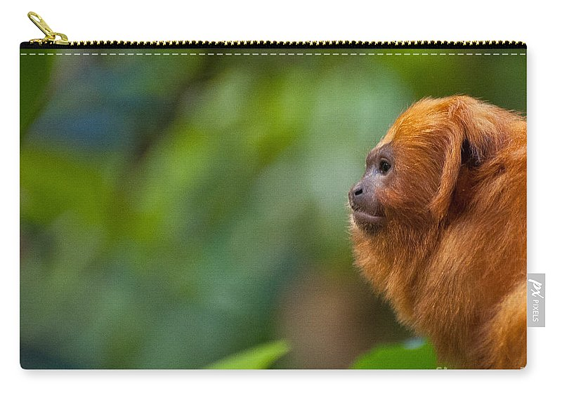 Golden Lion Carry-all Pouch featuring the photograph The Golden Lion by Bianca Nadeau