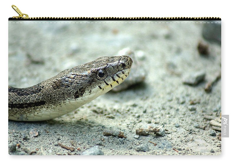 Gray Eastern Rat Snake Carry-all Pouch featuring the photograph The Gray Eastern Rat Snake Right Side Head Shot by Kim Pate