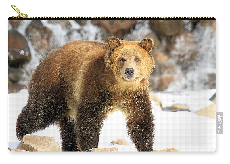 Grizzly Bear Carry-all Pouch featuring the photograph The Grizzly Strut by Adam Jewell