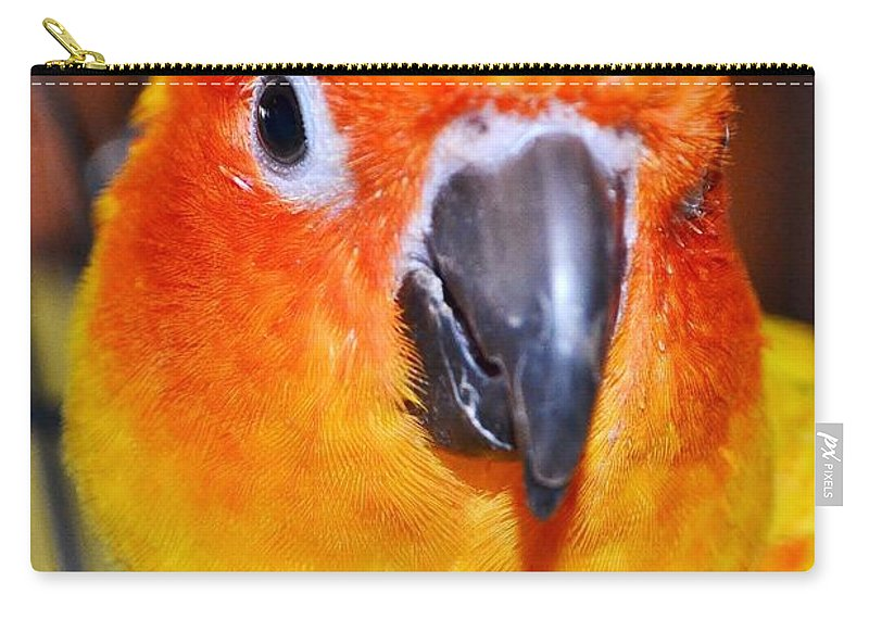 Bird Carry-all Pouch featuring the photograph The Hotel Guest - Boardwalk Plaza Hotel - Rehoboth Beach Delaware by Kim Bemis