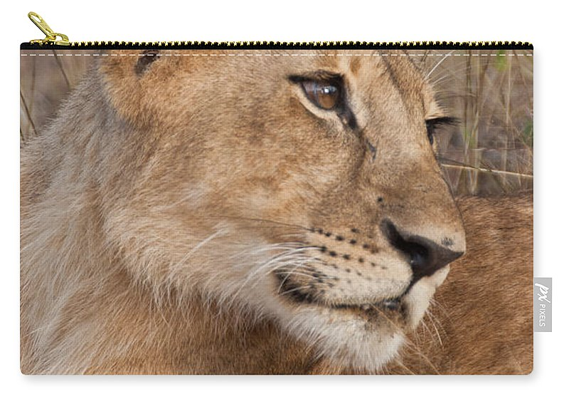 Africa Carry-all Pouch featuring the photograph The Matriarch by Pat Lucas