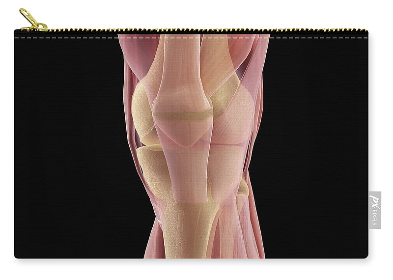 Digitally Generated Image Carry-all Pouch featuring the photograph The Muscles Of The Knee by Science Picture Co