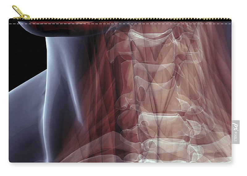 Transparent Carry-all Pouch featuring the photograph The Muscles Of The Neck by Science Picture Co
