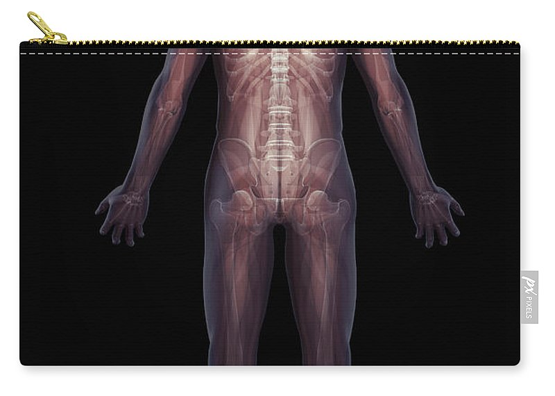 Rib Cage Carry-all Pouch featuring the photograph The Musculoskeletal System Rear by Science Picture Co
