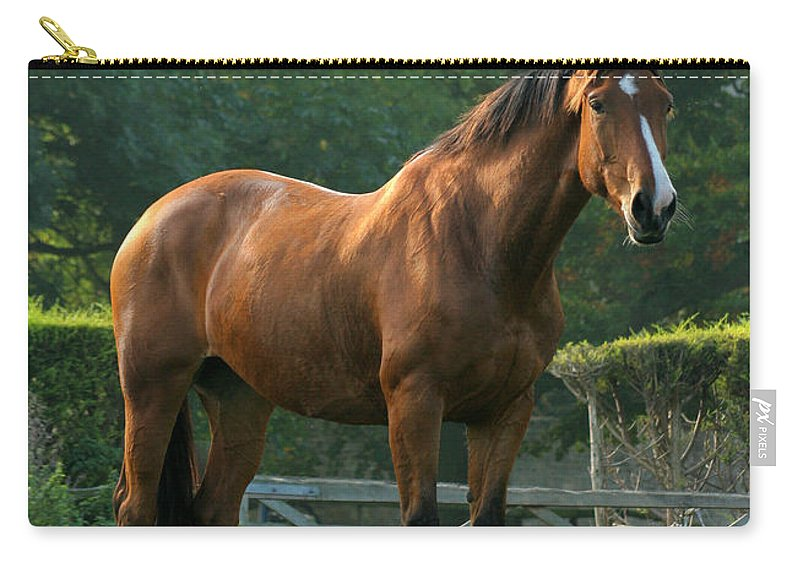 Horse Carry-all Pouch featuring the photograph The Observer by Angel Ciesniarska