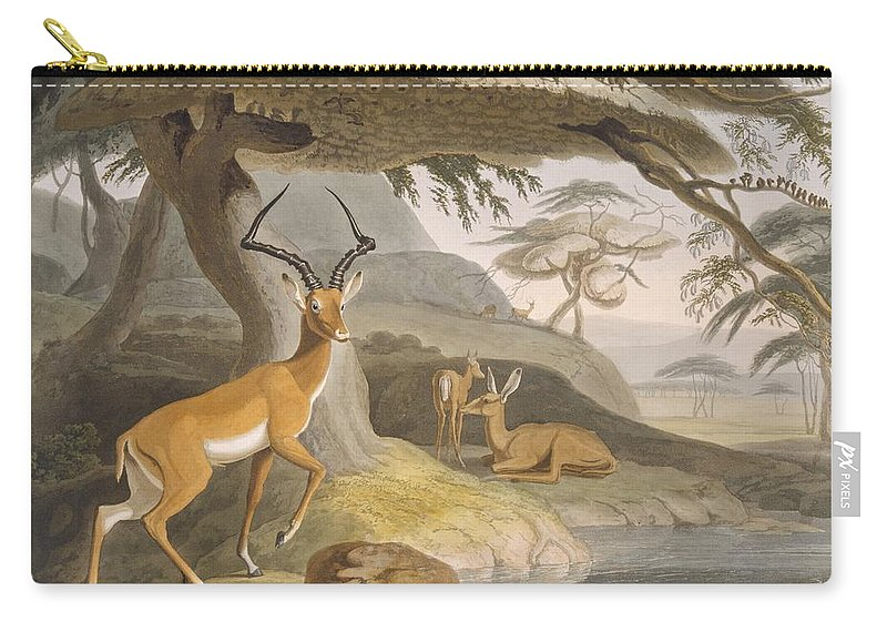 Africa Carry-all Pouch featuring the drawing The Pallah, 1804-05 by Samuel Daniell