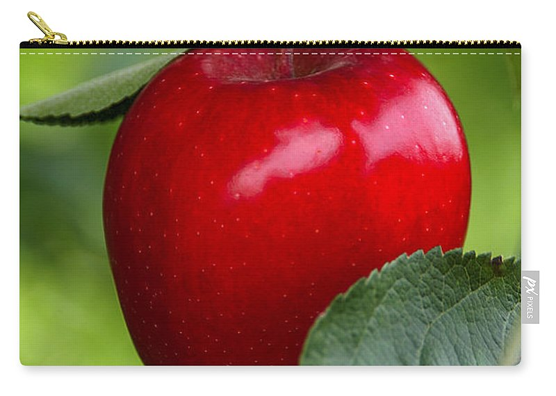 Apple Carry-all Pouch featuring the photograph The Red Apple by Anthony Sacco