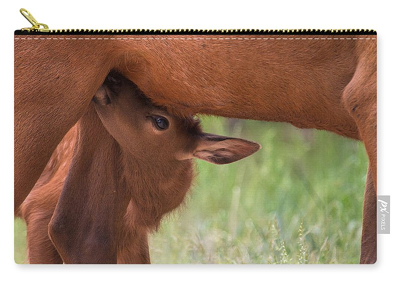 Elk Carry-all Pouch featuring the photograph The Right Stuff by Jim Garrison