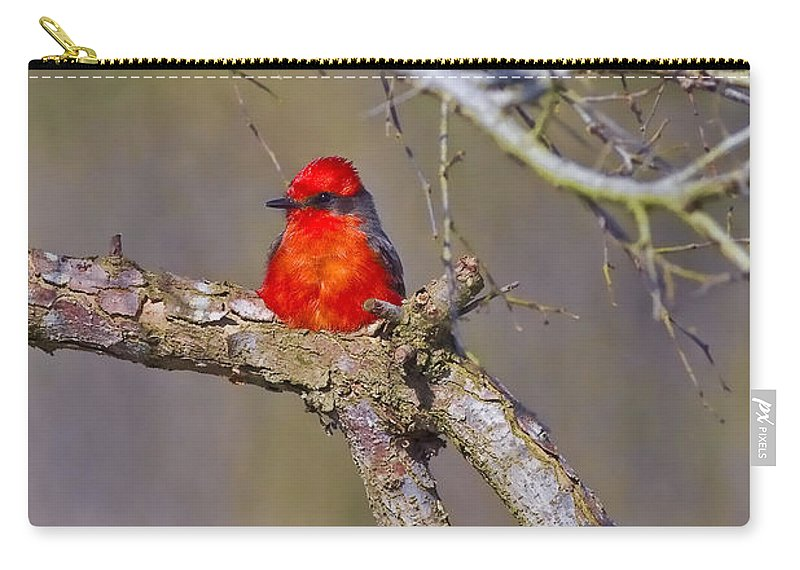 Vermilion Flycatcher Carry-all Pouch featuring the photograph The Scarlet Letter by Gary Holmes
