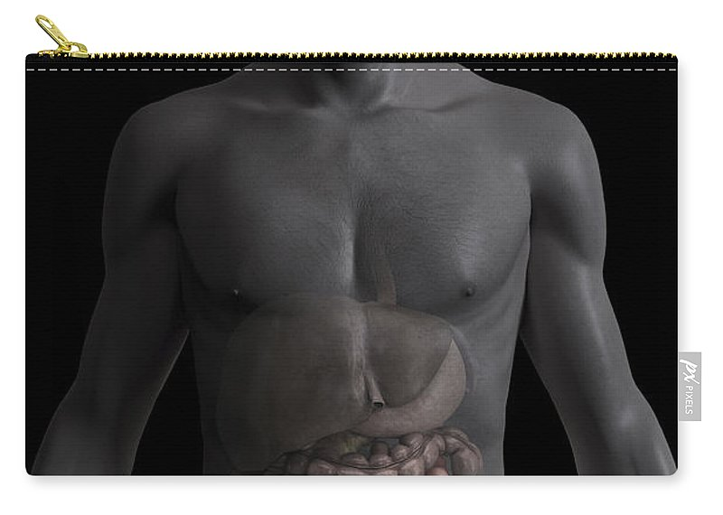 Internal Organs Carry-all Pouch featuring the photograph The Small Intestines by Science Picture Co