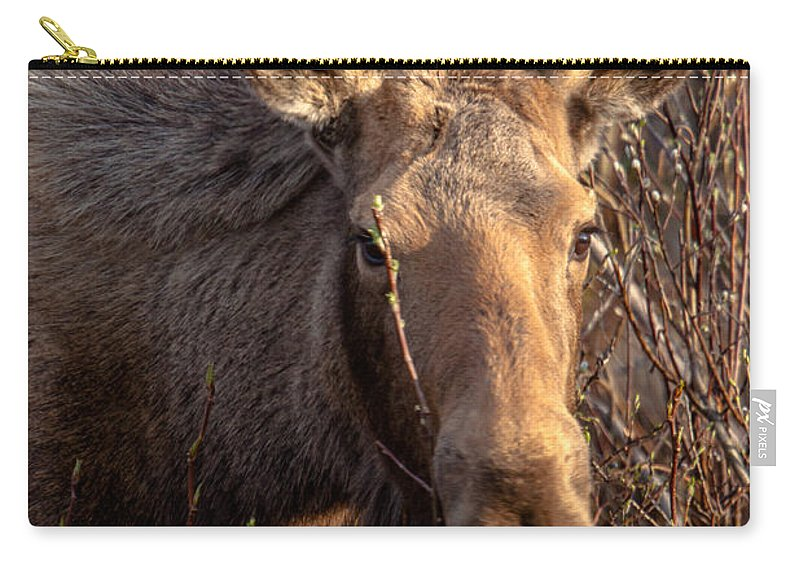 Moose Carry-all Pouch featuring the photograph The Stare Down by Thomas Sellberg