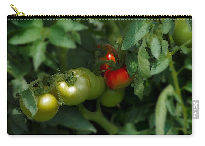 The Carry-all Pouch featuring the photograph The Tomato Plant by Bill Cannon