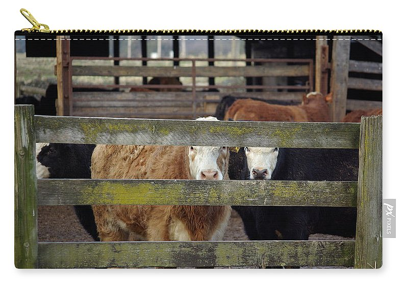 Cow Carry-all Pouch featuring the photograph The Watchers by Cindy Johnston