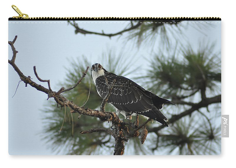 Wild Carry-all Pouch featuring the photograph The Wild Osprey by Bill Cannon