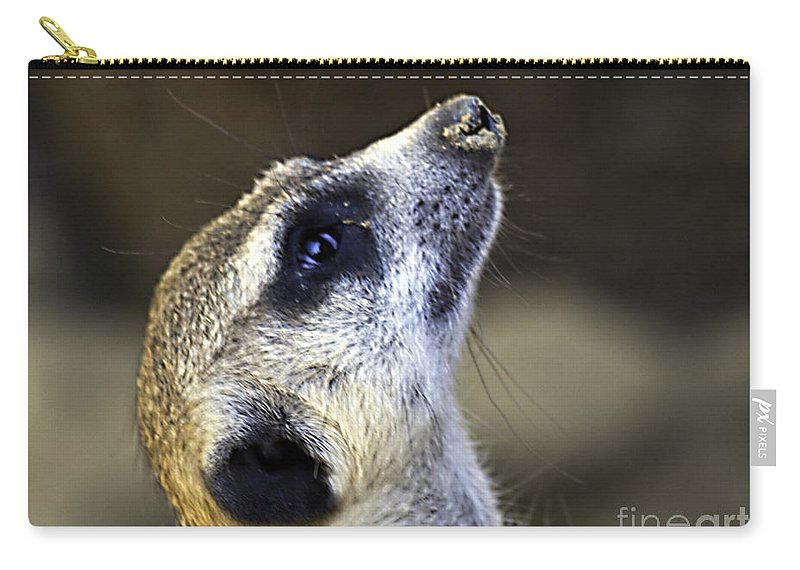 Meerkat Carry-all Pouch featuring the photograph Things Are Looking Up by Ken Frischkorn