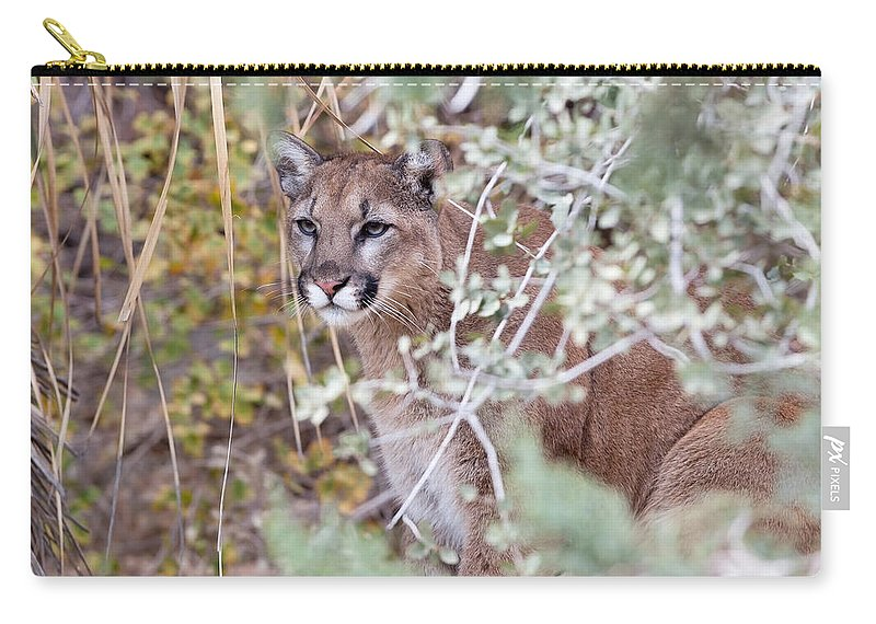 Mountain Lion Carry-all Pouch featuring the photograph Those Eyes by Cheryl Birkhead