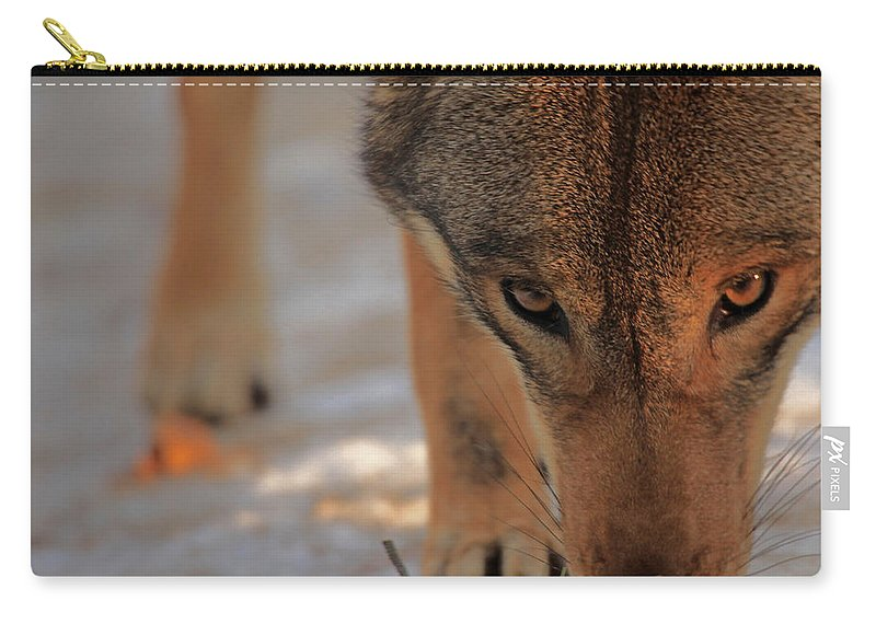 Wolf Carry-all Pouch featuring the photograph Those Eyes by Karol Livote