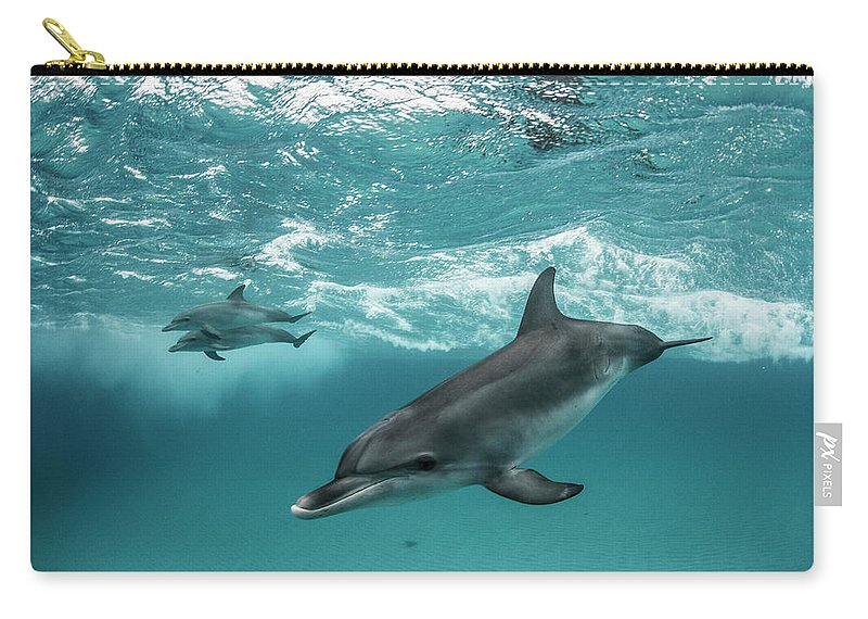 Tranquility Carry-all Pouch featuring the photograph Three Atlantic Spotted Dolphins by Rodrigo Friscione