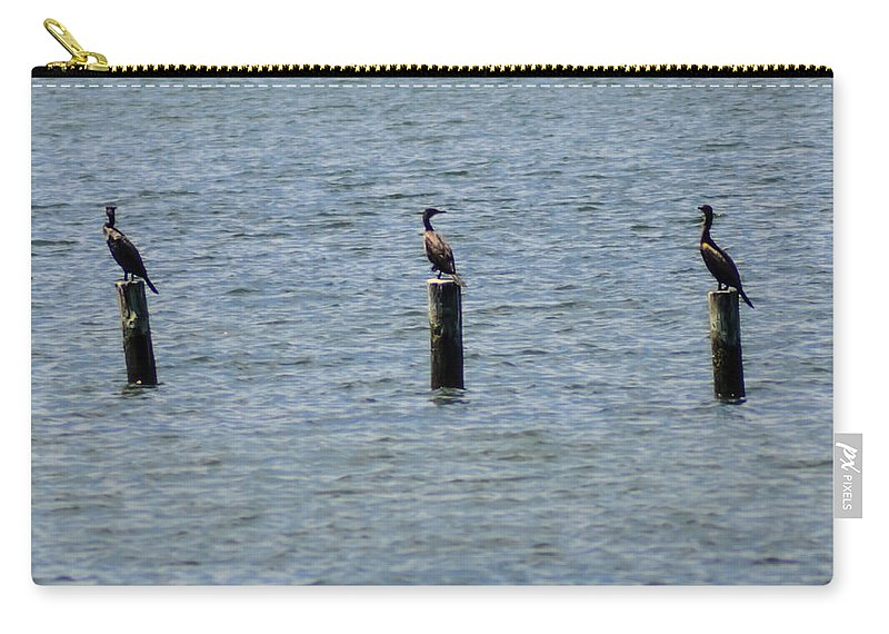 Key West Carry-all Pouch featuring the photograph Three Cormorants by Bill Cannon