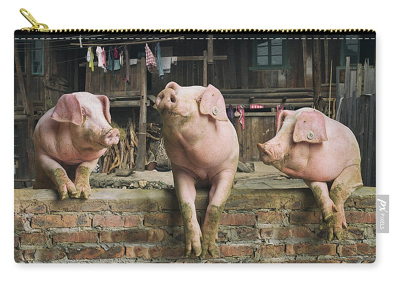 Pig Carry-all Pouch featuring the photograph Three Pigs Having A Chat In A Remote by Mediaproduction