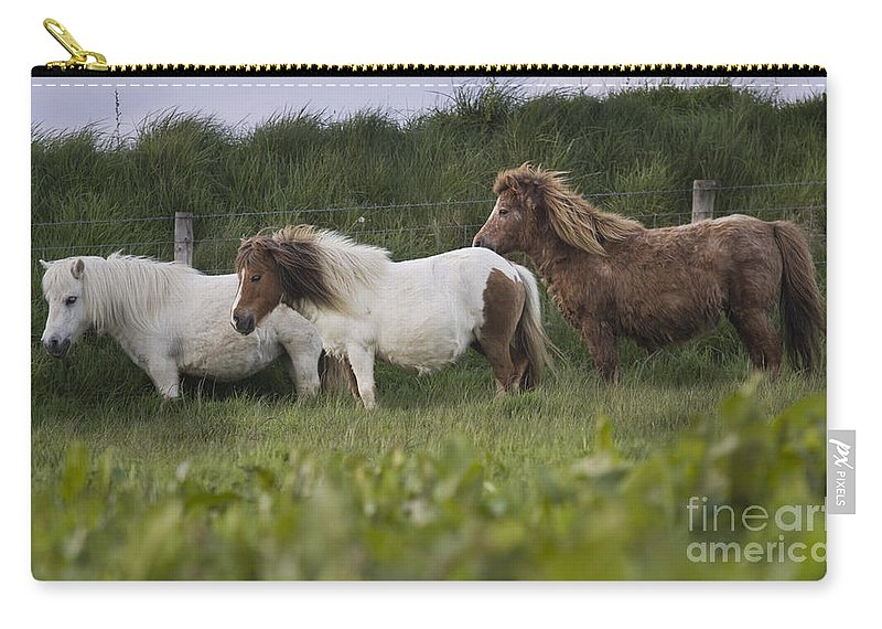 Shetland Carry-all Pouch featuring the photograph Three Ponies by Angel Tarantella