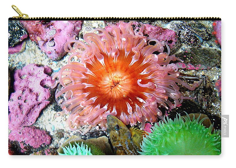 Anemones Carry-all Pouch featuring the photograph Tide Pool Creatures by Nick Kloepping