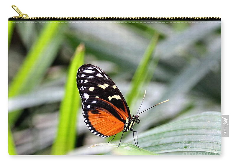 Butterfly Carry-all Pouch featuring the photograph Tiger Longwing Butterfly by Amanda Mohler