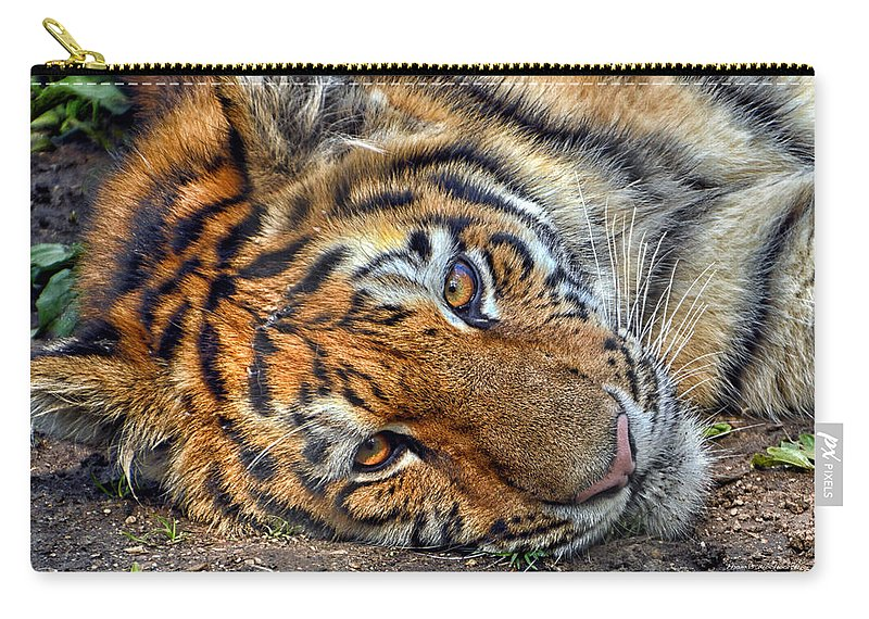 Animals Carry-all Pouch featuring the photograph Tiger Nap Time by Thomas Woolworth