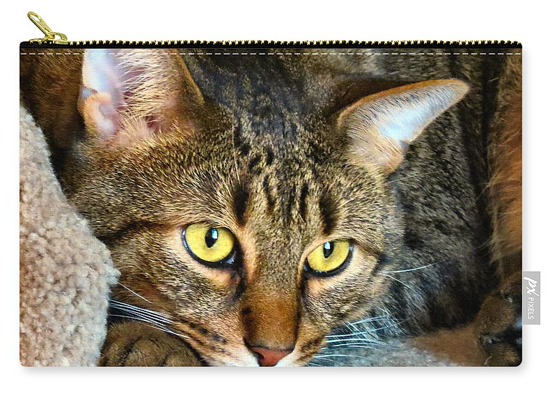 Cat Carry-all Pouch featuring the photograph Tiger Time by Art Dingo