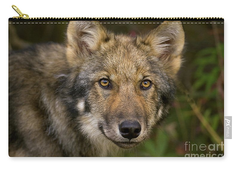 00427714 Carry-all Pouch featuring the photograph Timber Wolf In Denali by Yva Momatiuk John Eastcott