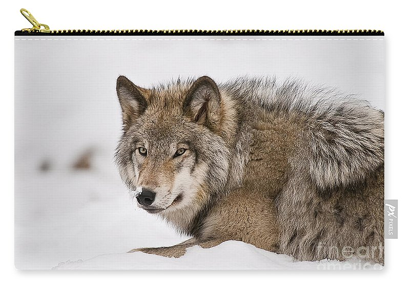 Timber Wolf Carry-all Pouch featuring the photograph Timber Wolf Pictures 1028 by World Wildlife Photography