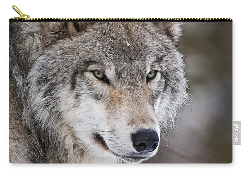 Timber Wolf Carry-all Pouch featuring the photograph Timber Wolf Pictures 1067 by World Wildlife Photography
