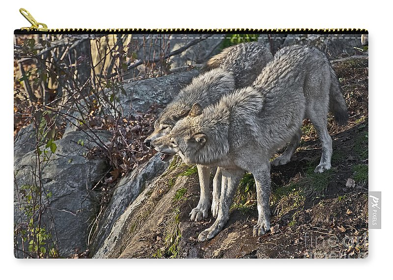 Timber Wolf Carry-all Pouch featuring the photograph Timber Wolf Pictures 1094 by World Wildlife Photography