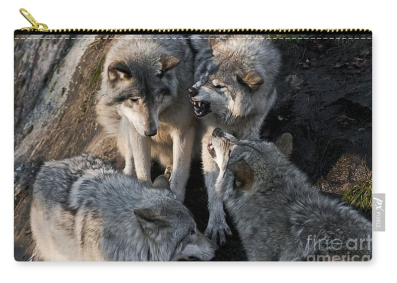 Timber Wolf Carry-all Pouch featuring the photograph Timber Wolf Pictures 1096 by World Wildlife Photography