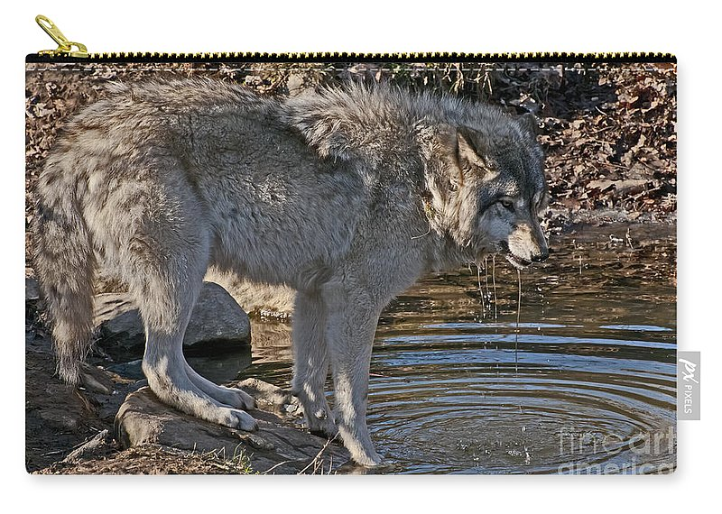 Timber Wolf Carry-all Pouch featuring the photograph Timber Wolf Pictures 1101 by World Wildlife Photography