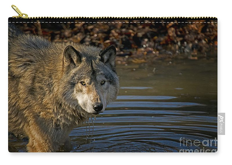 Timber Wolf Carry-all Pouch featuring the photograph Timber Wolf Pictures 1103 by World Wildlife Photography