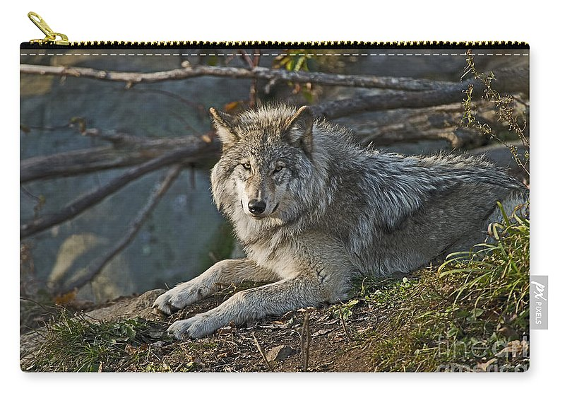 Timber Wolf Carry-all Pouch featuring the photograph Timber Wolf Pictures 1148 by World Wildlife Photography