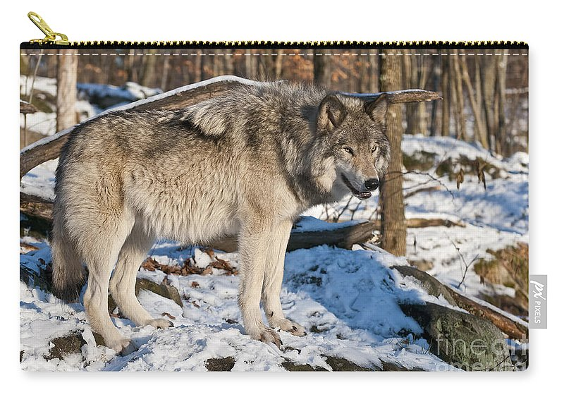 Timber Wolf Carry-all Pouch featuring the photograph Timber Wolf Pictures 1175 by World Wildlife Photography