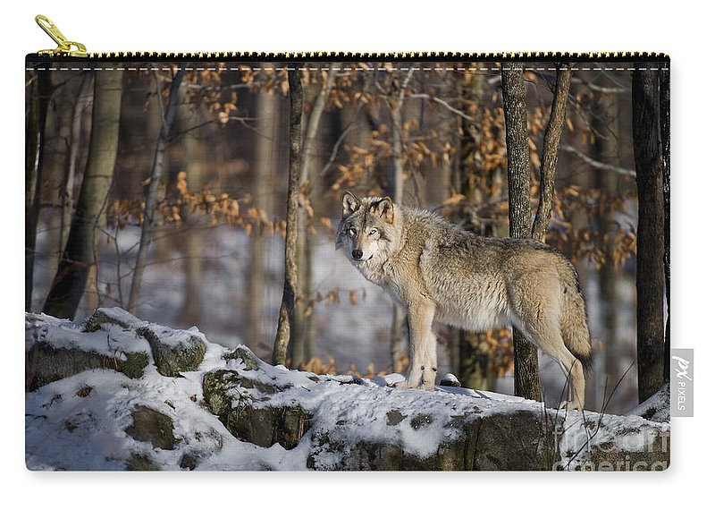 Timber Wolf Carry-all Pouch featuring the photograph Timber Wolf Pictures 1206 by World Wildlife Photography