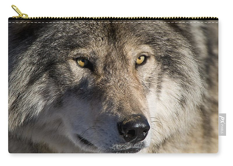 Timber Wolf Carry-all Pouch featuring the photograph Timber Wolf Pictures 1218 by World Wildlife Photography