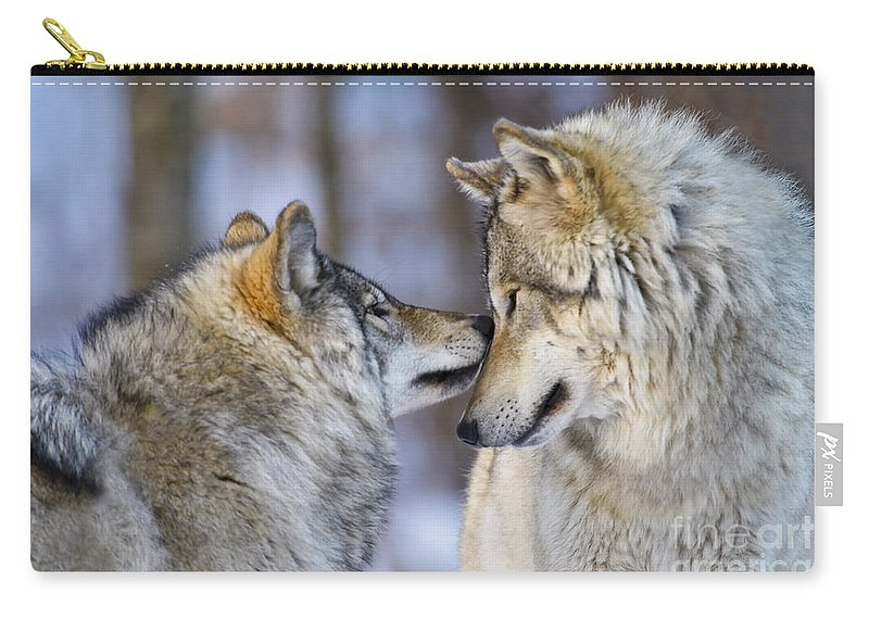 Timber Wolf Carry-all Pouch featuring the photograph Timber Wolf Pictures 1230 by World Wildlife Photography