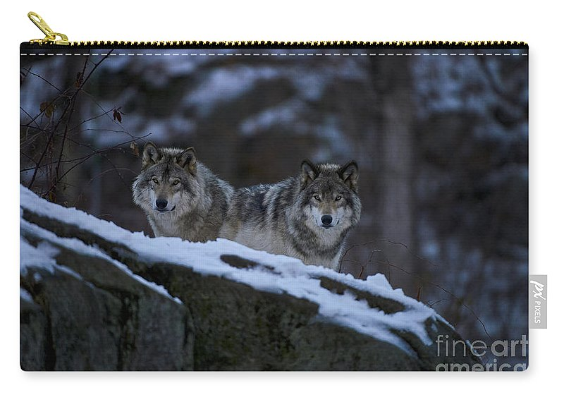 Timber Wolf Carry-all Pouch featuring the photograph Timber Wolf Pictures 1233 by World Wildlife Photography