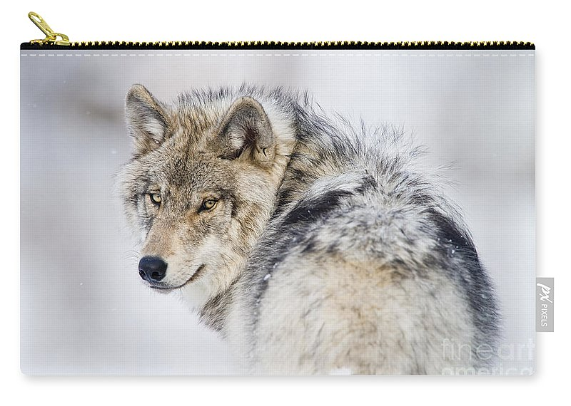 Timber Wolf Carry-all Pouch featuring the photograph Timber Wolf Pictures 1268 by World Wildlife Photography