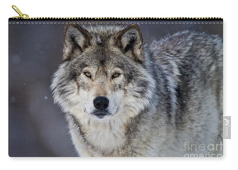 Timber Wolf Carry-all Pouch featuring the photograph Timber Wolf Pictures 1271 by World Wildlife Photography