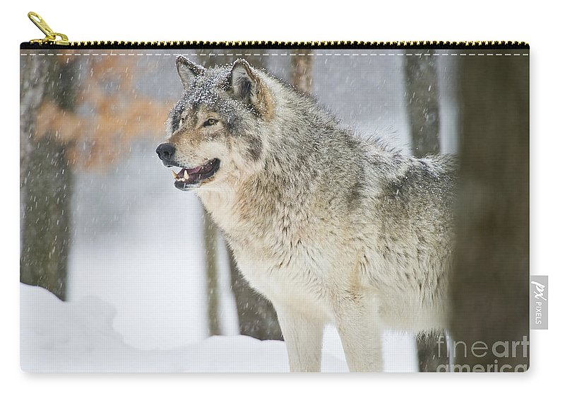 Timber Wolf Carry-all Pouch featuring the photograph Timber Wolf Pictures 1302 by World Wildlife Photography