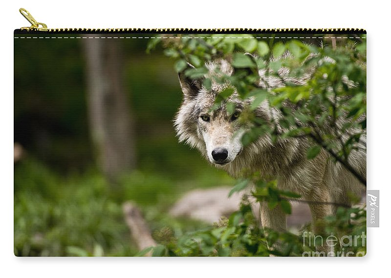 Timber Wolf Carry-all Pouch featuring the photograph Timber Wolf Pictures 1328 by World Wildlife Photography