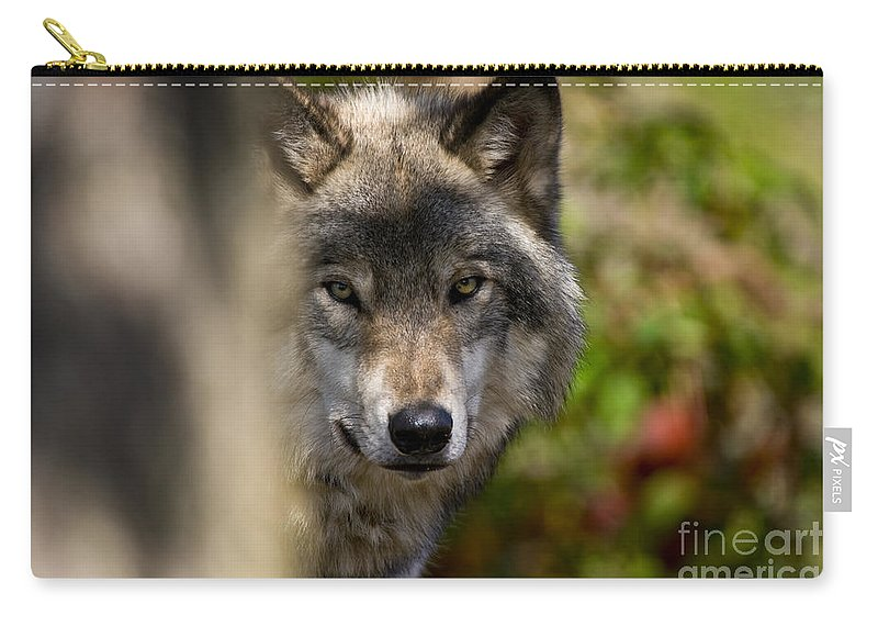 Timber Wolf Carry-all Pouch featuring the photograph Timber Wolf Pictures 1365 by World Wildlife Photography